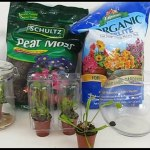 Venus Fly Trap Terrarium Feeding Care Transplanting 影片 Dailymotion