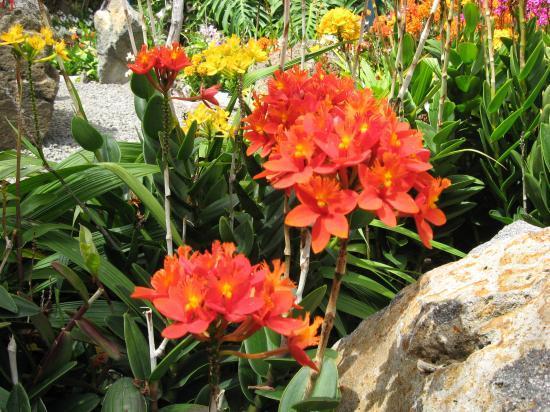 Fleurs De La Runion