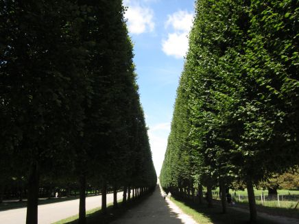 Carefully-sculpted lines of trees on the grounds of Château de Versailles