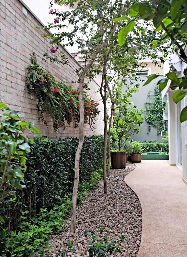 Plantados em linha, três resedás. Na parede, painel com columeias (Foto: Pedro Abude / Editora Globo)