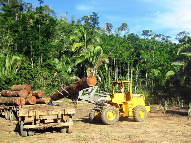 Madeira apreendida pelo Ibama em operação no município de Aripuanã (Foto: Divulgação/Ibama)