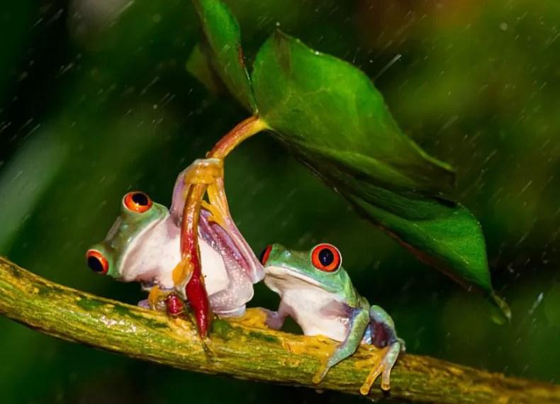 Resultado de imagem para animais se protegem da chuva
