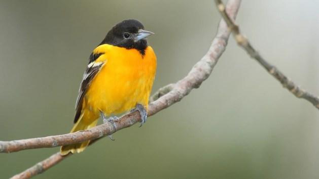 Resultado de imagem para Mudanças climáticas podem extinguir dois terços das aves na América do Norte
