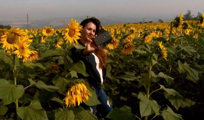 A gerente de pizzaria Patrícia Juliana dos Santos fez várias selfies no meio dos girassóis (Foto: Rodrigo Sargaço/EPTV)
