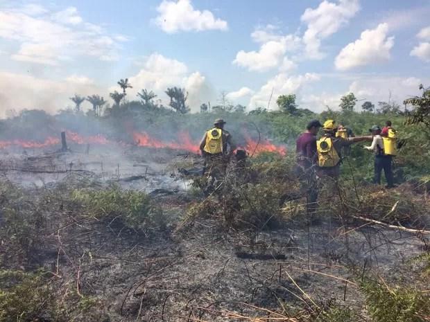 Ao menos 12 hectares já foram destruídos pelas chamas (Foto: Reprodução/Rede Amazônica Acre)