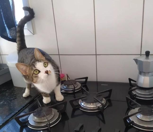 Gata travessa ligou o fogão de casa — Foto: Miriene Silva/Arquivo pessoal