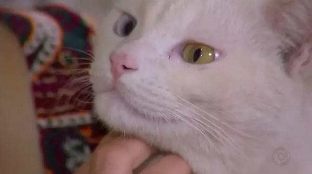 Gato Kenay tem heterocromia e dona é apaixonada pelas cores dos olhos do animal (Foto: Reprodução/TV TEM)