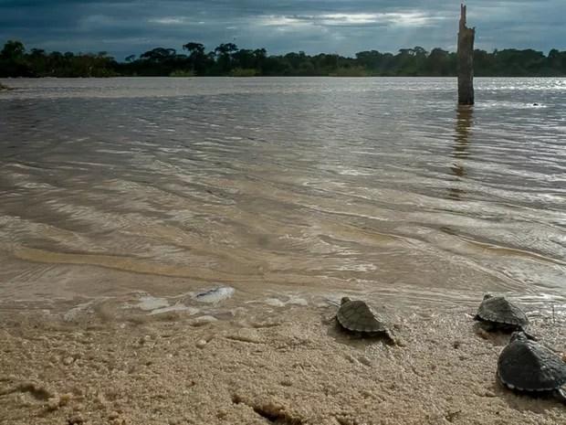 Projeto é desenvolvido no Rio das Mortes, em Ribeirão Cascalheira (Foto: José Medeiros/ Gcom-MT)