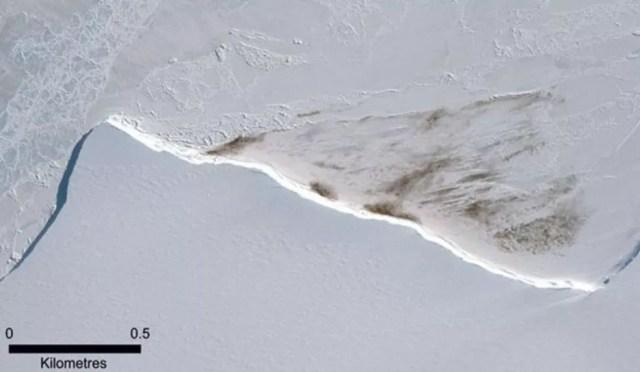 Nessa imagem de satélite de 2015, é possível ver a mancha de guano da colônia Halley Bay — Foto: DIGITALGLOBE, A MAXAR COMPANY