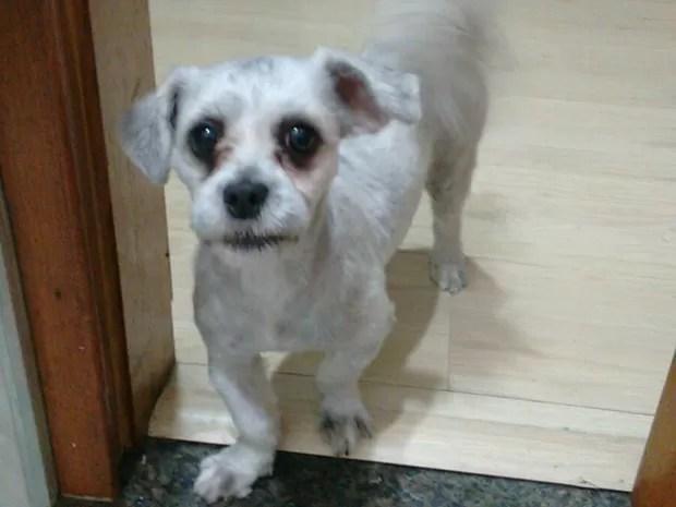Cadela de presidente de ONG de proteção a animais é furtada em SP (Foto: ONG Cão Sem Dono/Divulgação)