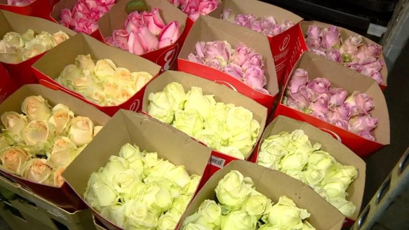 Rosas são uma das flores mais procuradas durante o Dia dos Namorados (Foto: Reprodução/EPTV)