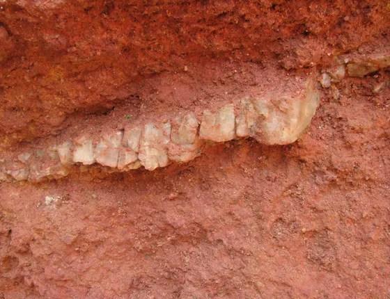 Ouro encontrado em garimpo ilegal na Floresta Estadual do Paru, no Pará (Foto: Imazon)