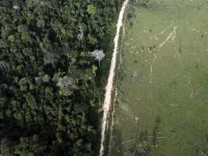 Faixa de floresta tropical devastada próximo ao Parque Nacional da Amazônia (Foto: Nacho Doce/Reuters)