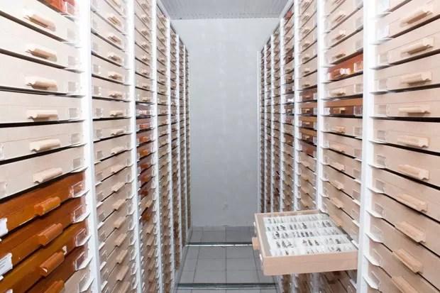 Coleção de insetos no Departamento de Ciências Biológicas  (Foto: Diego Nunes Barbosa/Divulgação)