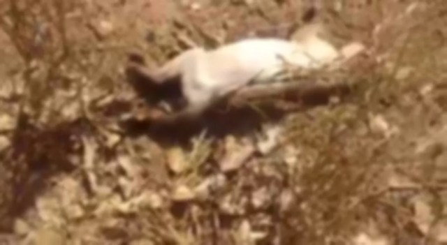 Gatos são encontrados mortos por possível envenenamento em Cacoal — Foto: Reprodução/Redes Sociais
