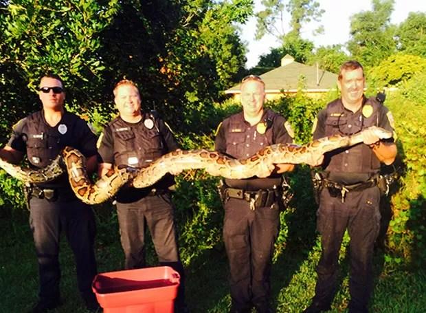 Polícia de Port St. Lucie capturou cobra gigante na sexta-feira (Foto: Divulgação/Port St. Lucie Police)