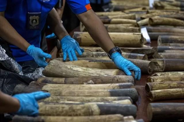 Em foto desta segunda-feira (6) ficiais da alfândega confiscaram marfim contrabandeado na Tailândia (Foto:  Reuters/Athit Perawongmetha)