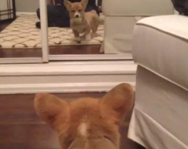 Fiona ficou espantada com o próprio reflexo no espelho e saiu correndo em seguida (Foto: Reprodução)