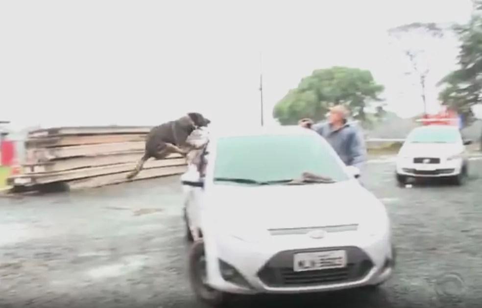 Animal foi reconhecido pelas suas competências em Xanxerê (Foto: Reprodução/RBS TV)