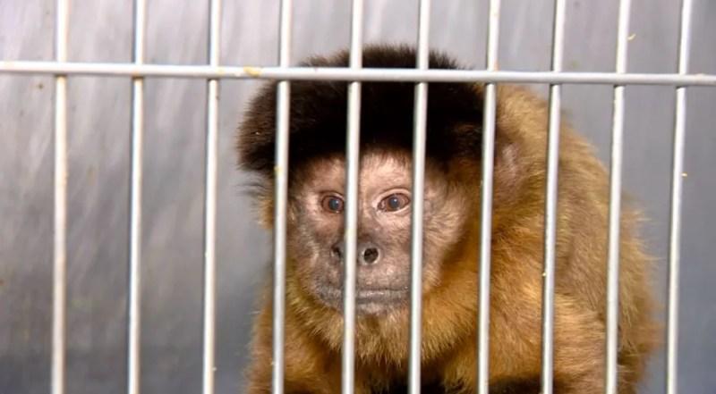 Onde está a fauna brasileira? Panorama do tráfico de animais revela futuro  preocupante | Terra da Gente | G1