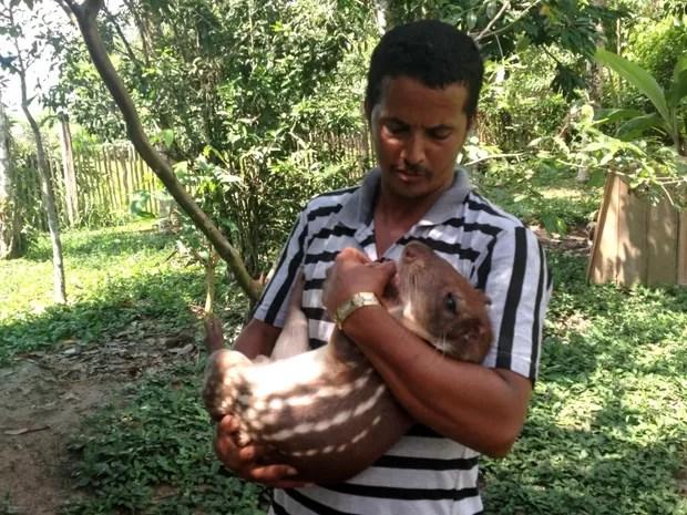 Paca farmer safe pet on your lap (Photo: Genival Moura / G1)