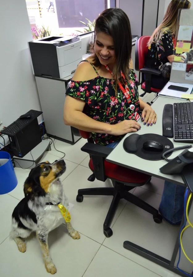 A atendente do SAC Stephanie Ghise leva Pierrot para o ambiente de trabalho e todos ajudam a cuidar (Foto: Fabiana Assis/G1)