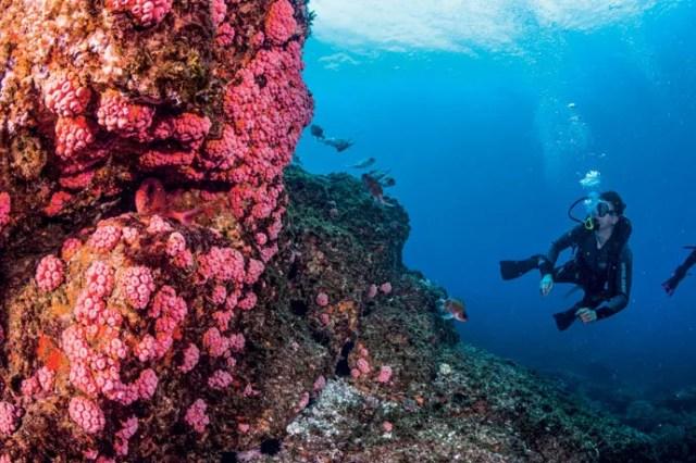Pesquisador inspeciona costão repleto de espécies de coral-sol durante visita ao arquipélago de Alcatrazes, em São Paulo (Foto: Leo Francini)