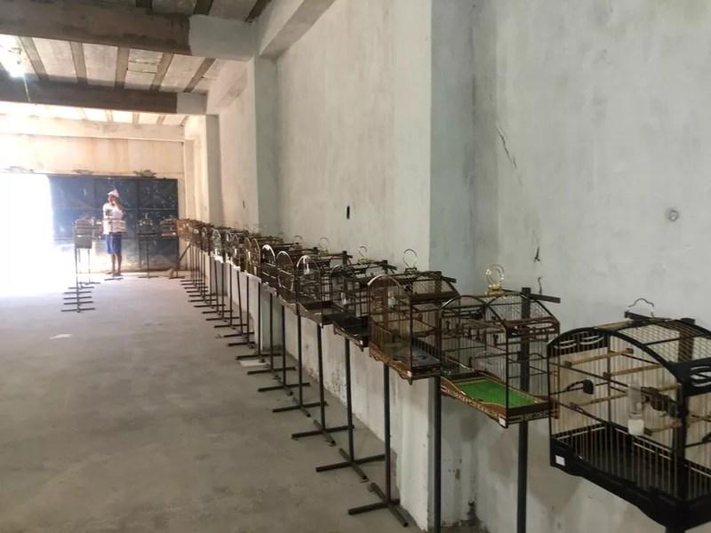 Torneio irregular de canto de aves terminou com 90 pássaros apreendidos — Foto: Divulgação/SSP-BA