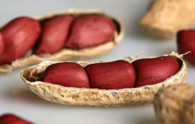 Amendoim e óleo de azeite fazem muito bem para o ser humano (Foto: Reprodução)