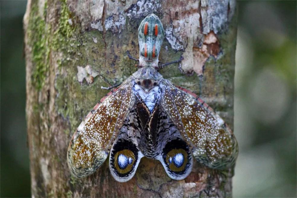 Aparência considerada estranha do inseto assusta muitas pessoas: picada não é capaz de matar — Foto: Arquivo TG