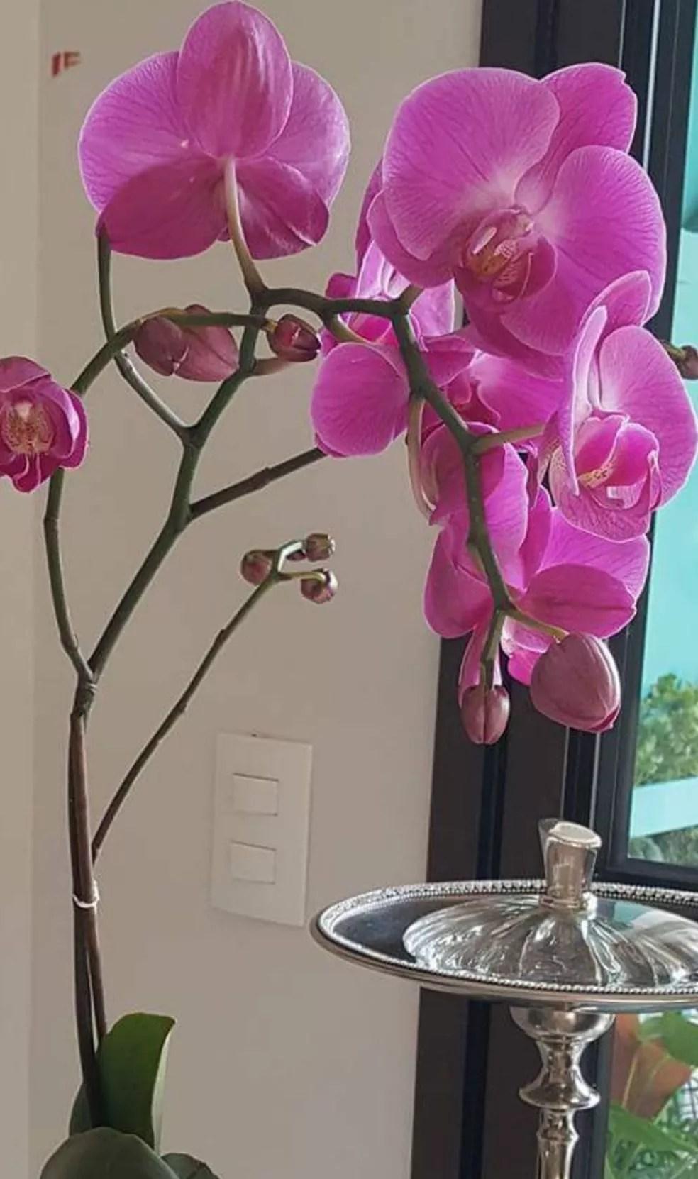 Ana Rosellis, do Bairro Maracanã em Uberlândia, mostrou a orquídea da casa dela.  (Foto: Ana Rosellis Alcoforado/Arquivo Pessoal.)