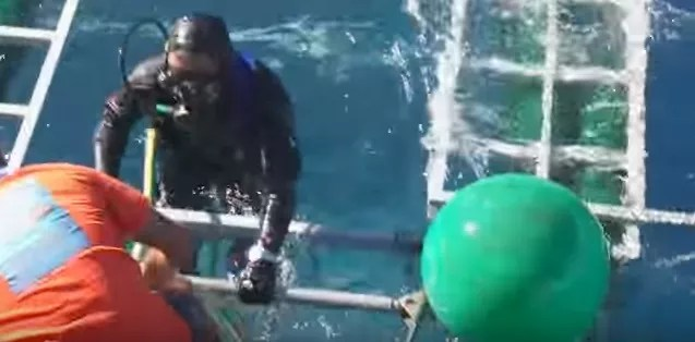 O mergulhador escapa sem ferimento