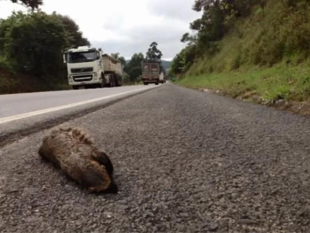 Pesquisa da Ufla estima que 475 milhões de animais morram atropelados no país por ano, Lavras (Foto: Reprodução EPTV)