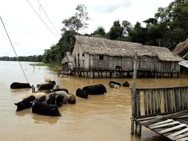 Rio Purus atingiu as cidades de Boca do Acre, Canutama, Lábrea e Pauini (Foto: Divulgação/AAM)