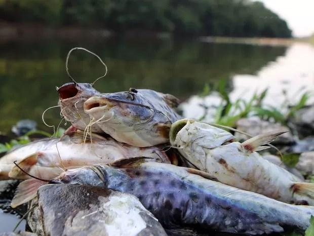 Peixes mortos foram encontrados no Rio Piracicaba  (Foto: Mateus Medeiros/acervo pessoal)