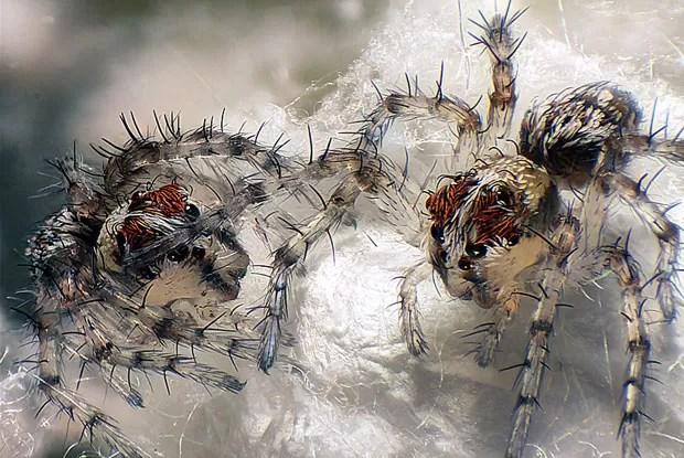 Acima, o segundo lugar da competição ficou para Walter Piorkowski, em seu registro da vida dos recém-nascidos em um ninho de aranhas (Foto: Small World/Walter Piorkowski)