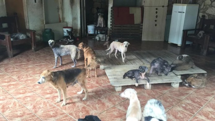 Animais na sala da casa de Ângela, em Lauro de Freitas — Foto: Alan Alves/G1