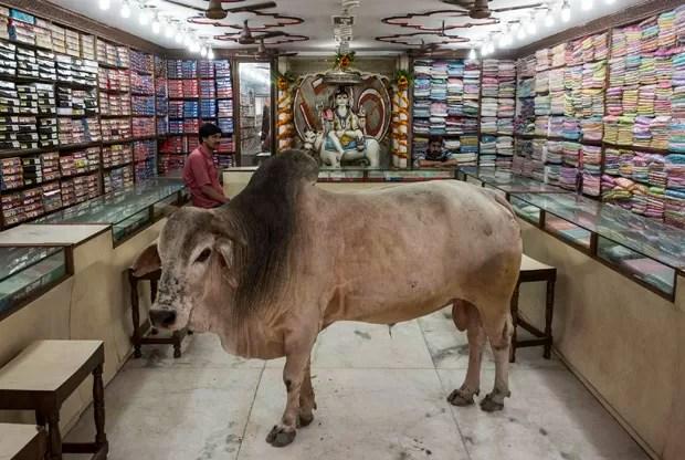 Resultado de imagem para vaca dentro de loja na india