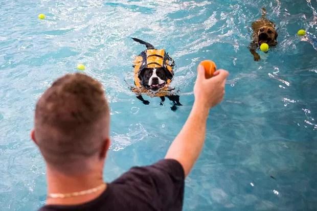 Evento de natação para cães foi realizado em Seattle, no estado de Washington (Foto: Jordan Stead/Seattlepi.com/AP)