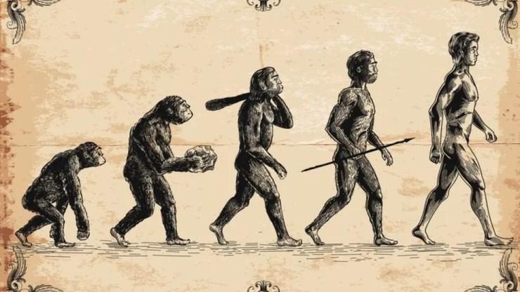 Humanos e macacos têm ancestrais comuns — Foto: GETTY IMAGES via BBC Brasil