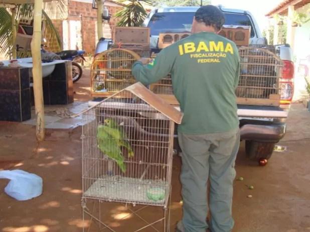 Objetivo da ação era coibir a criação ilegal e o tráfico de animais silvestres (Foto: Divulgação / PRF)