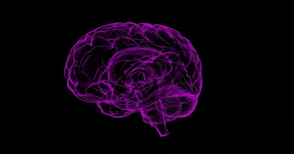 Mesmo sem circulação sanguínea, o cérebro continua tentando se recuperar. (Foto: Sbtlneet /Pixabay/CC0 Creative Commons)