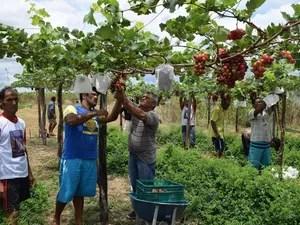 Famílias se uniram para produzir frutas em terreno na comunidade (Foto: Alonso Gomes/Arquivo Pessoal)