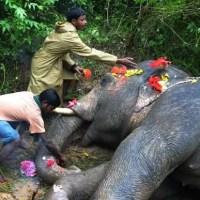 Moradores velam corpo de elefante atropelado por trem na Índia