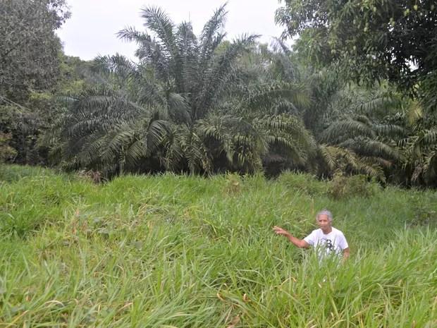 Onde ficava o campo de tiros da Polícia Militar hoje há apenas vegetação (Foto: Adelcimar Carvalho/G1)