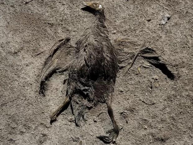 Segundo ambientalistas, cerca de 200 espécies migraram ou morreram (Foto: Reuters/David Mercado)