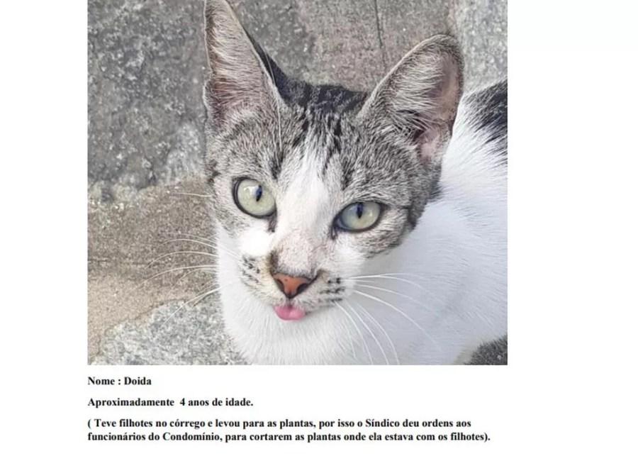 Relatos dos moradores constam na petição cujos autores são os próprios gatos — Foto: Reprodução
