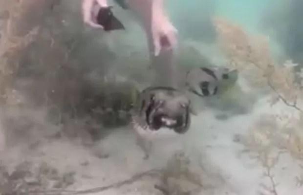 Peixe foi resgatado por ativistas da ONG Core Sea (Foto: Reprodução/YouTube/Core Sea)
