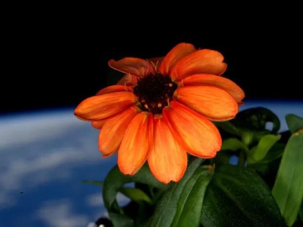 Flor toma sol na Estação Espacial Internacional em uma foto de 17 de janeiro deste ano (Foto: Scott Kelly/Nasa via AP)