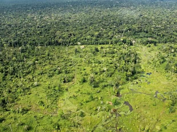 Desmatamento no Amazonas  (Foto: Adneison Severiano/G1 AM)